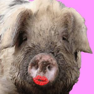 lipstick_on_pig